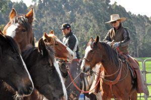 Challenge 1A: Basic horse understanding and safety skills – ground and ridden skills