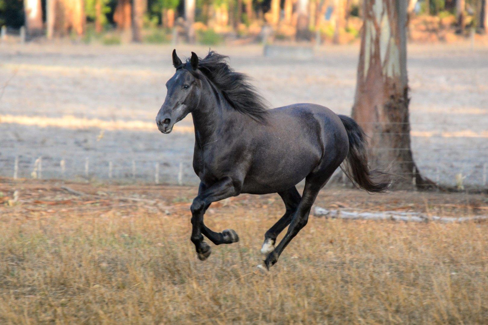 Premium Horses for Sale