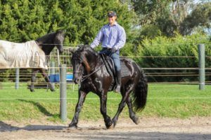 April Challenge 2A: The 'stable platform' and advancing ridden horse