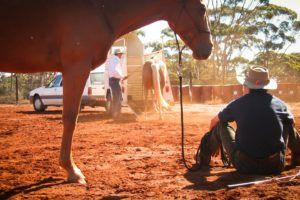 Challenge 1A: Basic horse understanding and safety skills – ground and ridden skills