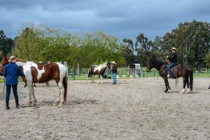 April Challenge 1A: Basic horse understanding and safety skills – ground and ridden skills